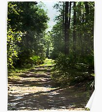 Goethe State Forest Poster