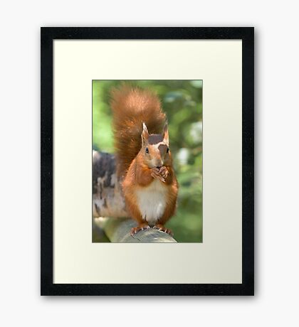 Pretty squirrel is pretty Framed Print