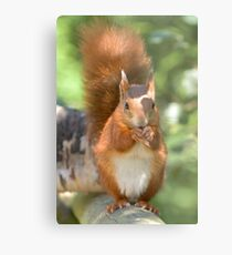 Pretty squirrel is pretty Metal Print