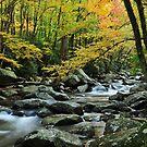 smoky mountain stream by dc witmer