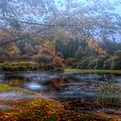 Bisley Gardens - Mt Wilson NSW Australia by Brad Woodman