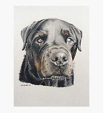 Max the beautiful Rottweiler Photographic Print