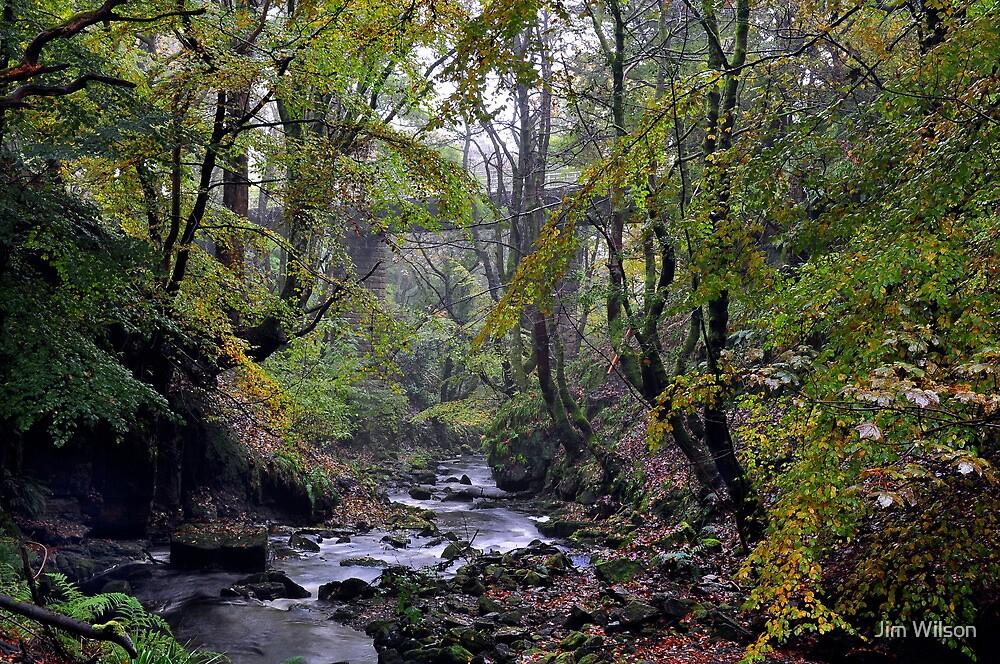 Autumn, Garell Glen, Kilsyth,Scotland by Jim Wilson