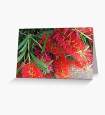 Bee On A Red Wattle Greeting Card