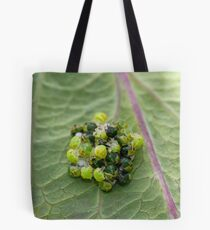 Common Green Shield Bugs hatching Tote Bag