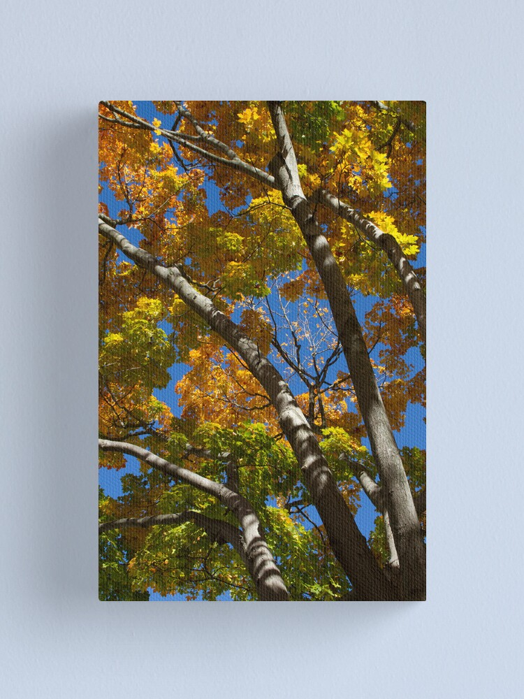 Alternate view of Reaching Up Canvas Print