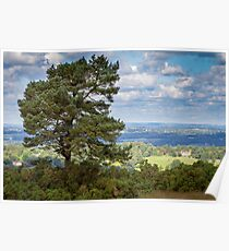 Lone Tree, Ashdown Forest Poster