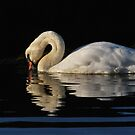 Westside Swan by NordicBlackbird