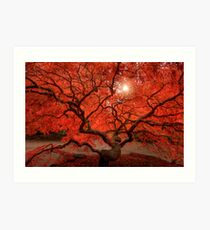 Red Lace Art Print