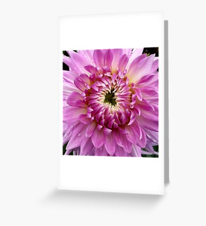 Pink Dahlia 2 Greeting Card