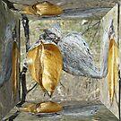 Milkweed Pods - Mirror Box by MotherNature