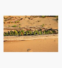 MCC Natures Window Photographic Print
