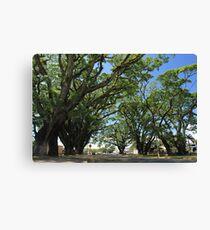 MCC Mossman Raintrees Canvas Print