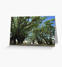MCC Mossman Raintrees Greeting Card