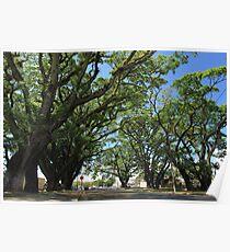 MCC Mossman Raintrees Poster