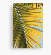 MCC Palm Canvas Print