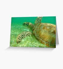 MCC Turtle Great Barrier Reef Greeting Card