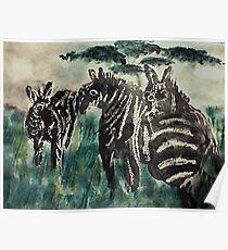 Zebra #4 daytime,  3 friends, watercolor Poster