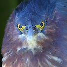 Angry Bird by naturalnomad