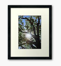 MCC Sun Star Framed Print