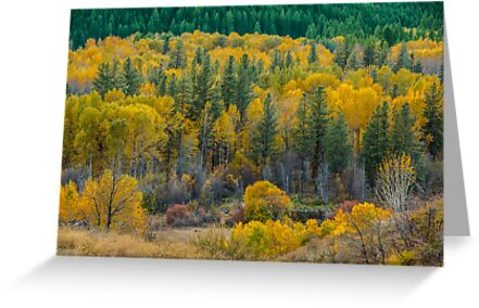 Methow River Valley by Jim Stiles