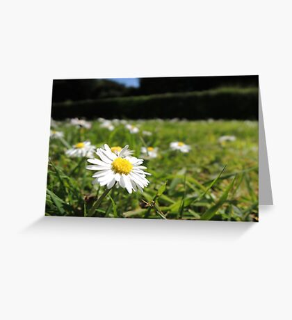 One in a million - Daisy Greeting Card