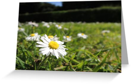One in a million - Daisy by CreativeEm