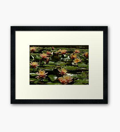 Gracemere Open Garden, Woodville Framed Print