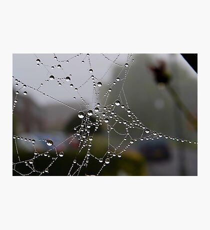 Abandoned Web Photographic Print