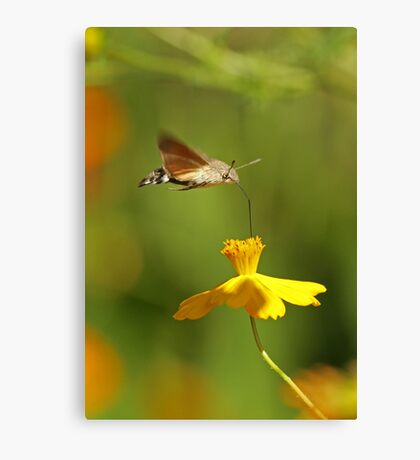 I Just Love Yellow Canvas Print
