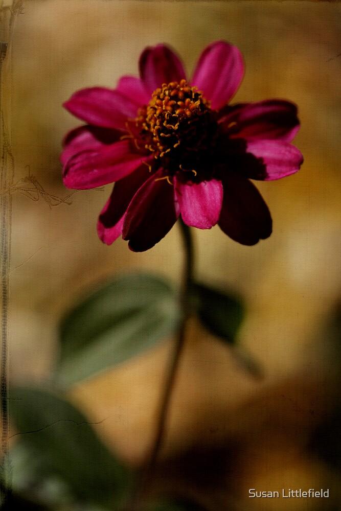 Fall Zinnia by Susan Littlefield
