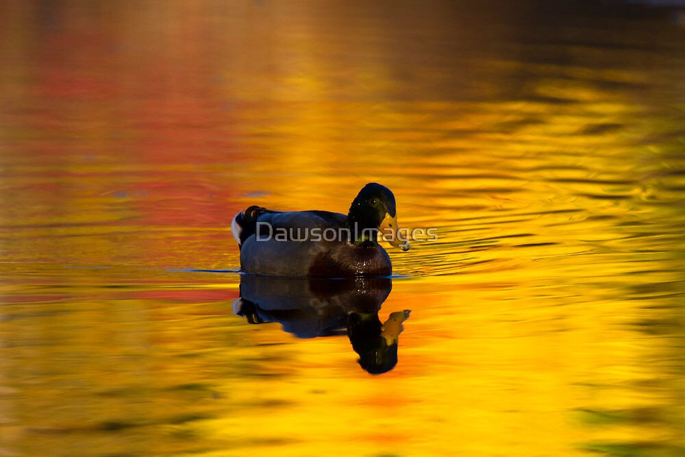 On Golden Waters by DawsonImages