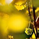 2012 - leftover at the vineyard by Ursa Vogel