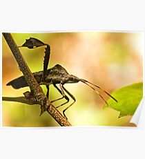 Assassin Bug Posters  79fc00979a16f