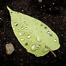 Rain Drops by Jess Meacham