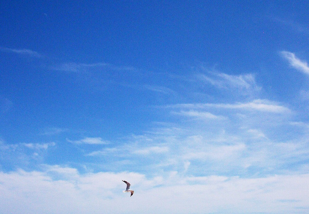 Seagull One - 10 10 12 by Robert Phillips