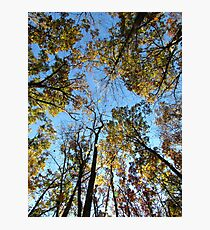 Autumn Trees, New York Photographic Print