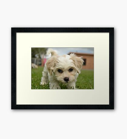 small male Framed Print
