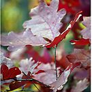 Autumn Maple by Tina Longwell