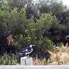 Beach Bird Eight - 14 10 12 by Robert Phillips