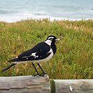 Beach Bird Four - 14 10 12 by Robert Phillips