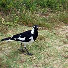 Beach Bird Three - 14 10 12 by Robert Phillips