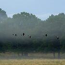 Wild goose by akwel