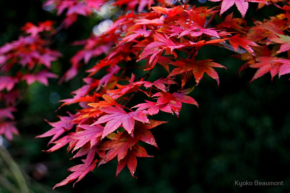 Autumn has arrived (2) by Kyoko Beaumont