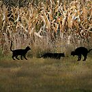 Cats in the Cornfield by Angie O'Connor