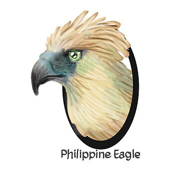 Philippine eagle by Xantippe