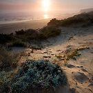 Light the Way - Mornington Peninsula, Victoria, Australia by Sean Farrow