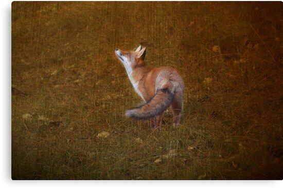 Fox by Nicole W.