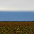 There's A Strange Rain A'Comin' O'Er The Prairie  by WildestArt