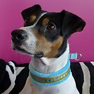 Eino with his new collar by KanaShow